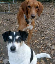Bella ja Choco