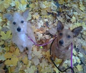 Luna ja Rommy